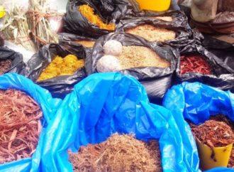 Covid-19 : l'OMS et les CDC Afrique appuient la recherche de la médecine traditionnelle en Afrique